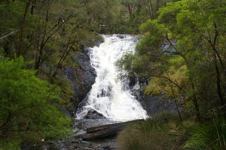 Greater Beedelup National Park Protected area in the South West region of Western Australia