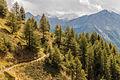 Bergtocht van Gimillan (1805m.) naar Colle Tsa Sètse in Cogne Valley (Italië). Zicht op het bergpad 01.jpg