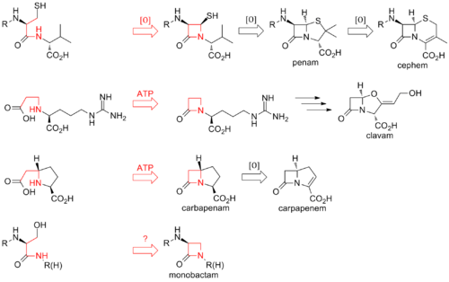 Beta-lactam closure routes.png