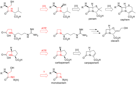 Overview of biosynthetic routes to the different classes of β-lactam compounds.