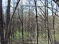 Bezhitskiy rayon, Bryansk, Bryanskaya oblast', Russia - panoramio (138).jpg