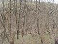 Bezhitskiy rayon, Bryansk, Bryanskaya oblast', Russia - panoramio (99).jpg