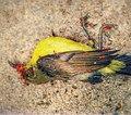 Bird. 1.jpg