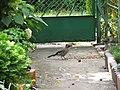 Bird 9 (16955277442).jpg