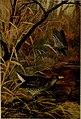 Bird lore (1914) (14752596211).jpg