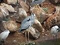 Birds in the Bird Aviary, Nandankanan - Birdssn.jpg