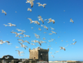 Birds of Essaouira.png
