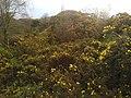 Blackburn, UK - panoramio (24).jpg