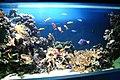 Blue Reef Aquarium 9 March 2005 Cornwall o (278546824).jpg