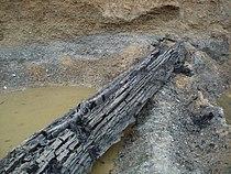 Bog-wood from Sava river, BiH.jpg