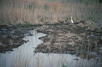 Kent County, Delaware - Bombay Hook National Wildlife Refuge