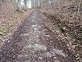 Borač, stará dlážděná cesta do Lomnice 05.JPG