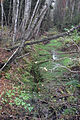 Borkovické blata - odvodňovací stoka.jpg