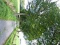 Bornem Barelstraat Jonge Lindendreef (3) - 230199 - onroerenderfgoed.jpg
