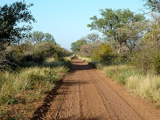 Bushveld - Low altitude bushveld in the Limpopo valley.