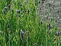 Botânico 11 - CGLS.jpg