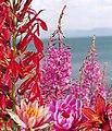 Bouquet fleurs2.jpg