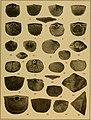Brachiopod genera of the suborders Orthoidea and Pentameroidea (1932) (20219420000).jpg