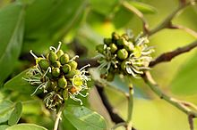 list of plants by common name wikipedia