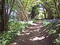 Bridleway, Castle Hill Woods - geograph.org.uk - 421105.jpg