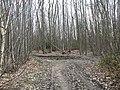 Bridleway in Oaken Wood - geograph.org.uk - 1222169.jpg