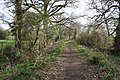 Bridleway near Chorlton Lane - geograph.org.uk - 1244326.jpg