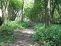 Bridleway near Inholms Farm - geograph.org.uk - 1314706.jpg