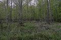 Bruchwald im Naturschutzgebiet Kronwald.jpg