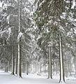 Bucknell Woods - Snow.jpg