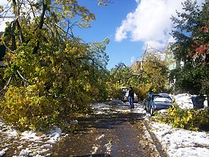"""Lake Storm """"Aphid"""" - Looking westward on Bird Avenue in Buffalo, New York just off Elmwood Avenue, the street is completely blocked by extensive tree damage"""