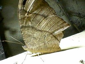 Butterfly0142.jpg