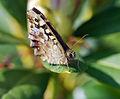 Butterfly (3462220069).jpg