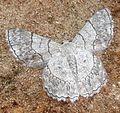 Butterfly Ampasimbe.JPG