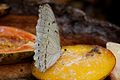 Butterfly at Chester Zoo 10.jpg