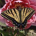 Butterfly flower cliche.jpg