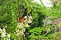 Butterfly on Moringa.jpg