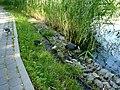 Bydgoski Balaton - panoramio (21).jpg