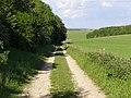 Byway alongside Charlton Furze - geograph.org.uk - 177785.jpg