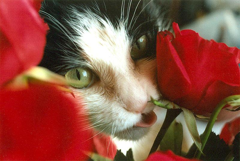 File:CAT&ROSEphotobyNancyWong.jpg