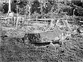 COLLECTIE TROPENMUSEUM Megalitisch grafmonument in een rijstveld bij Tegoerwangi TMnr 10025800.jpg