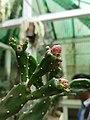 Cactus20170706 152506.jpg