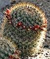 Cactus (10408554365).jpg