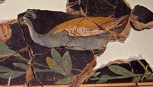 Bilbilis (Augusta Bilbilis) - fresco from domus 3, insula I, 1st c. BC (Catalayud Museum)