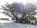 Camino Topada de la flor. - panoramio.jpg