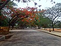 Campus Road , SJCE - panoramio.jpg