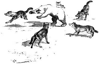 Canis lupus pack fighting Ursus arctos horribilis (illustration).jpg