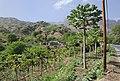 Cape Verde Santiago Isle papaya landscape.jpg