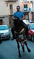 Capizzi Cavallo per le vie cittadine 0001.jpg
