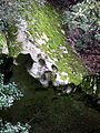 Capula bord de cavité de rocher (visage) 1.jpg