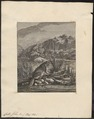 Castor fiber - 1700-1880 - Print - Iconographia Zoologica - Special Collections University of Amsterdam - UBA01 IZ20400213.tif